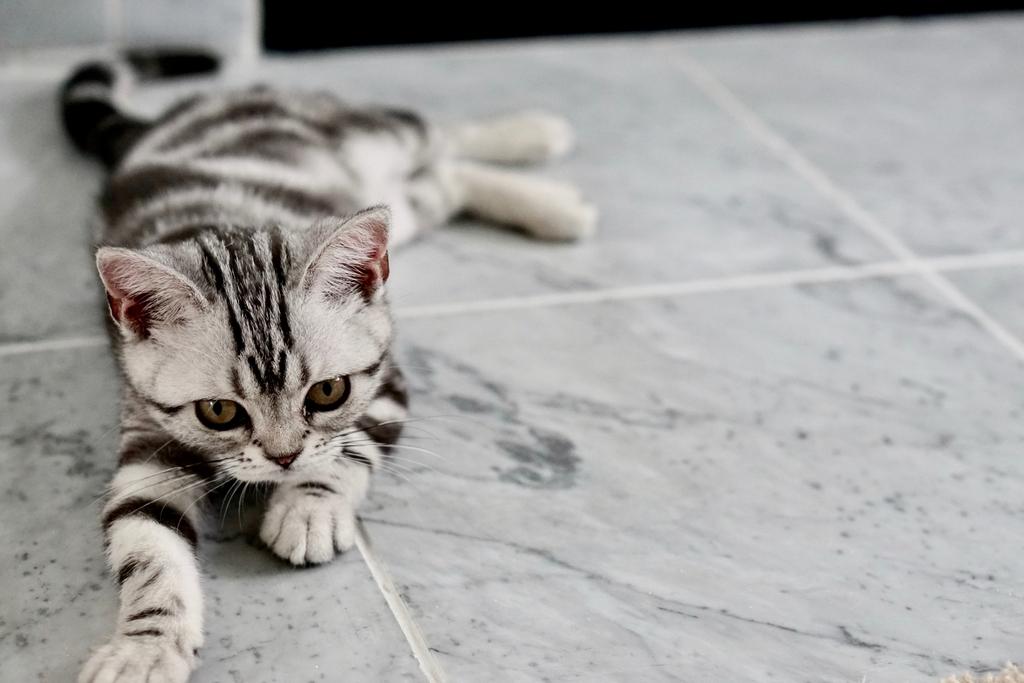 床暖房の上に猫が気持ち良さそうに横たわっています